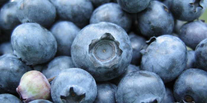 Nibbles: Blueberries