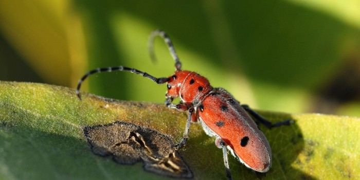 September Nature Almanac: Lush Grasses and Lots of Bugs