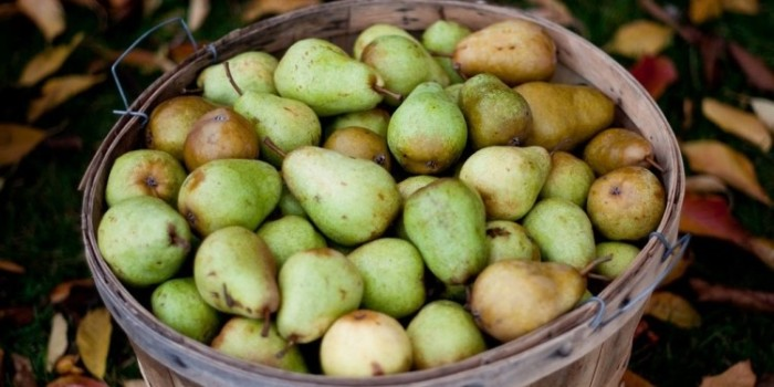 Naturally: More About Pears