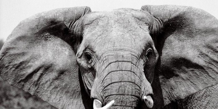 Dot Org: Global March for Elephants