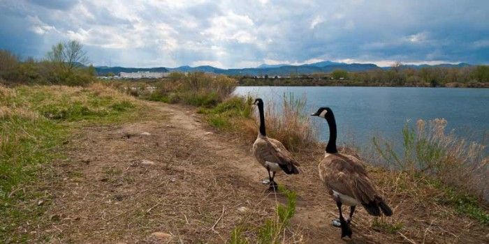 February Nature Almanac: Waterfowl and Birds at Prospect Park in Wheatridge