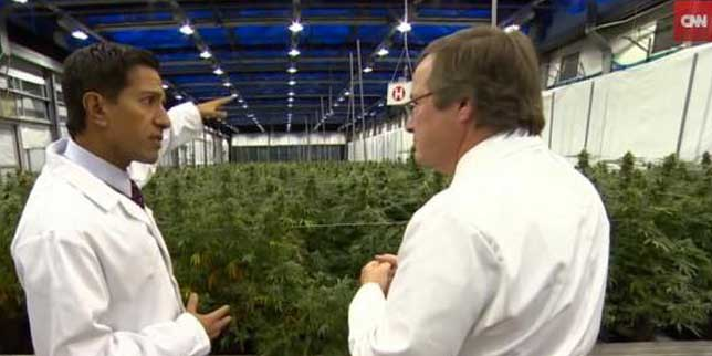 Weed Between the Lines: Gupta on Weed