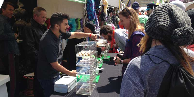 Weed Between The Lines: 2015 Cannabis Cup