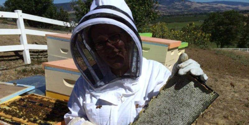 Havesting Honey