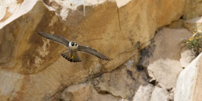 Dot Org: Boulder Open Space Closures to Protect Nesting Raptors