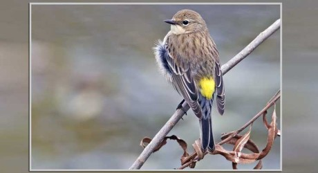 July Nature Almanac: Warblers in Long Canyon and Upper Gregory Canyon