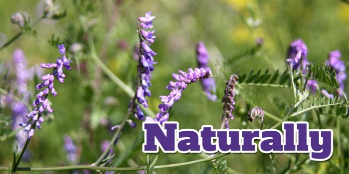 Naturally: Herbs for Stress