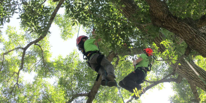 North American Tree Climbing Competition in Longmont