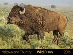 Dot Org: Buffalo Field Campaign