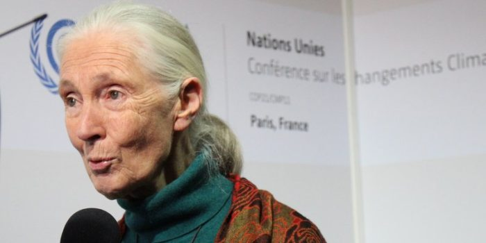 Jane Goodall's Support for Reducing Emissions through Deforestation and Degradation (REDD) Challenged by Cassandra Smithies