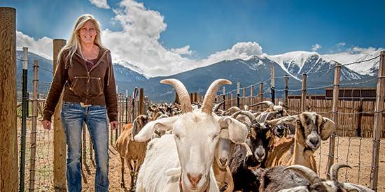 Nibbles Blog – The whey of the curds: The Colorado cheese trail