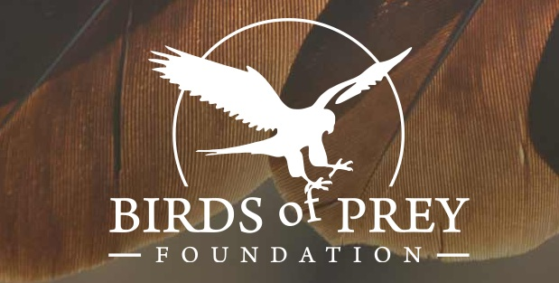 Dot Org: Birds of Prey