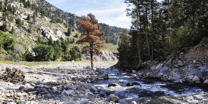 Thousands of fish die in Big Thompson Canyon as a result of flood reconstruction