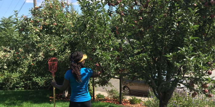 Community Fruit Rescue in Boulder