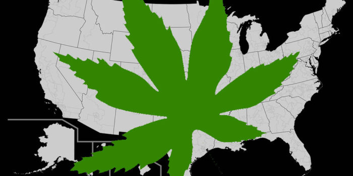 Sensi: Fighting for Legalization Across America