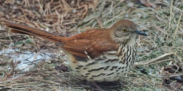 Nature Almanac: Wintering Birds in Boulder as an indicator of warming climate