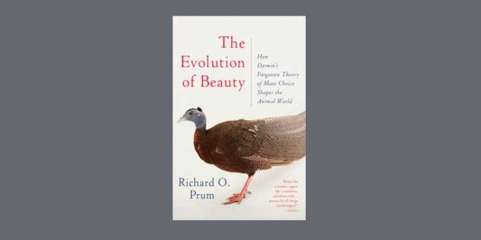 "Booktalk: Evolutionary ornithologist Richard Prum's ""Evolution of Beauty"""